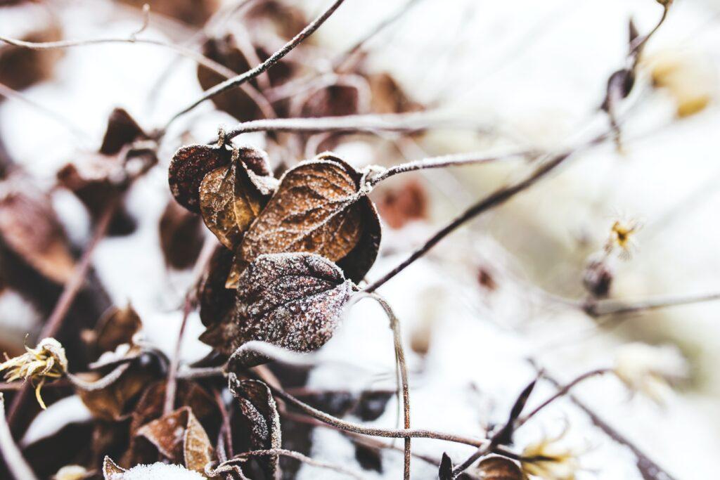 Tuinkalender januari